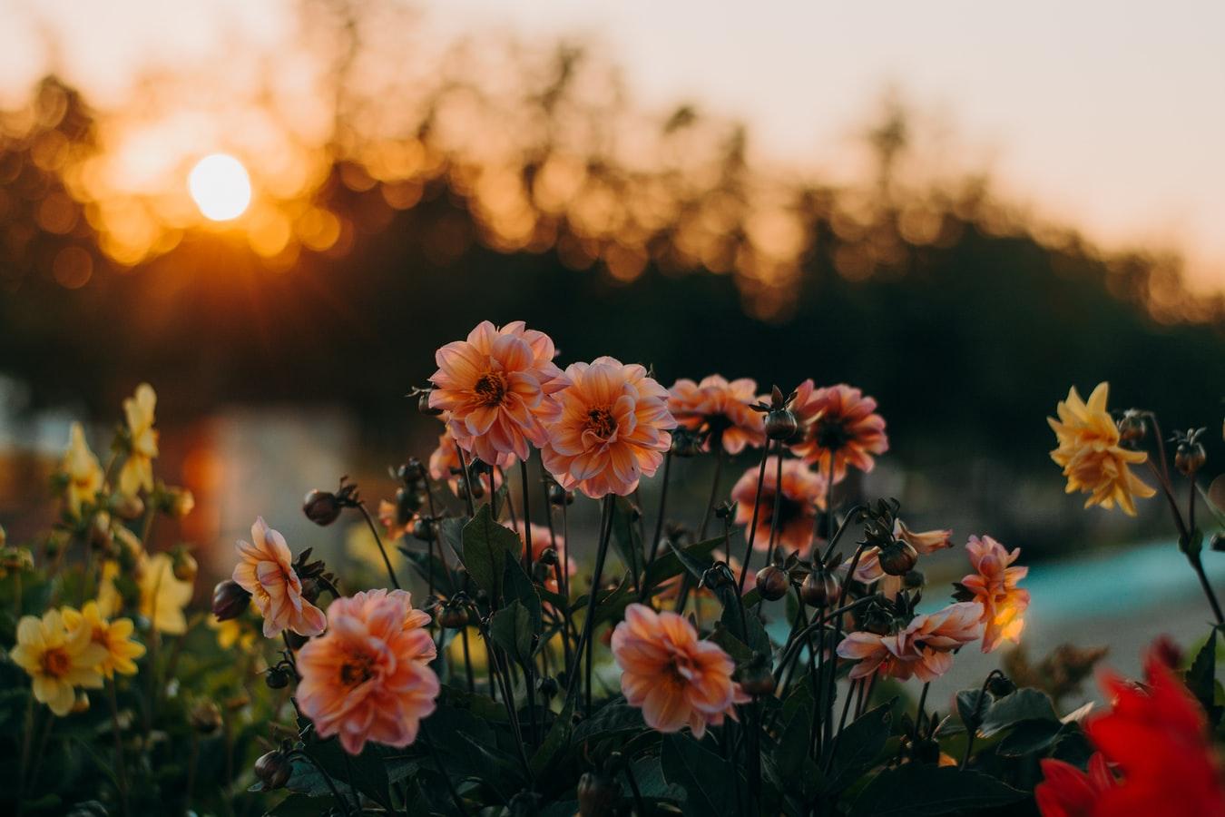 solera1905-px-pedroximenez-flores